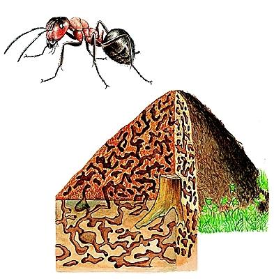 séismes,sciences,fourmis,planète