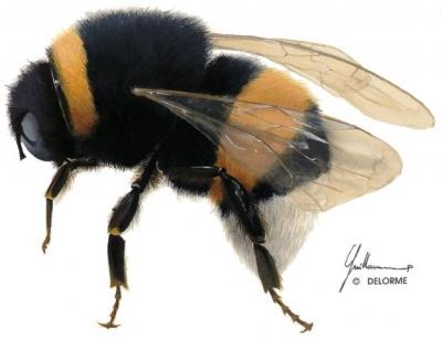 bourdons,abeilles,électricité,fleurs,sciences,biologie,ondes,électromagnétisme