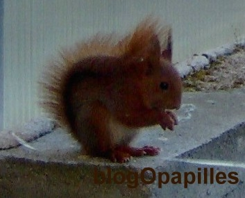écureuils,animaux,vie,foret