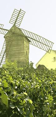moulin-vigne-sannois02.png