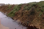 sapins-compost02.jpg