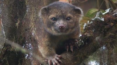 faune,biologie,taxonomie,sciences,ours,espèces