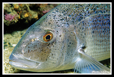poissons,mer,méditerranée,banyuls,écosystème