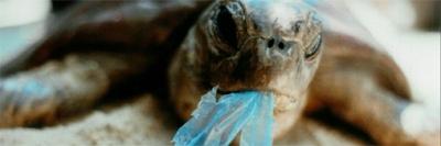 océans,pollution,plastique,écosystème,atlantique