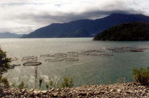 patagonie-saumon.jpg