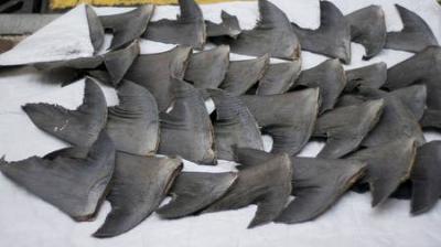 requin,gaspillage,poisson,consommation,pêche,océans,environnement