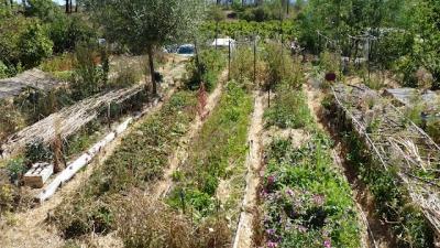 agroécologie,agriculture,agriculture durable,pesticides,apiculture,rabhi,agronomie,écologie,changement climatique