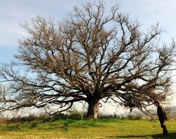 biodiversité,bois,énergies,énergies renouvelables,forêt,paysage