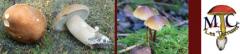 aev-avril09-champignon.jpg