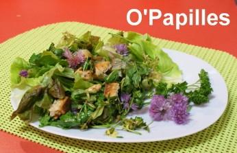 salade-laitue-fleurie04.jpg