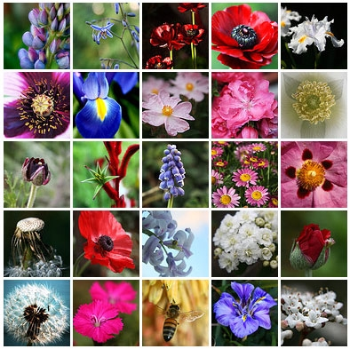 biodiversité,écosystème,écologie,espèces,espèces menacées