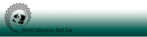 oiseaux-migrateurs02.png