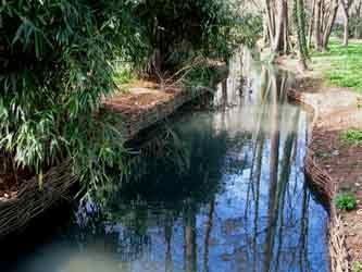 bassin, végétalisation,saule,érosion,argile
