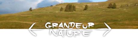 festival-grandeur-nature.png