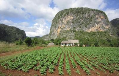 cuba,amérique du sud,agriculture intensive,monoculture,agroforesterie,sols,pollution,environnement