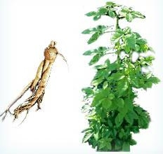 santé,stress,plantes,médecine,russie,russe,chine