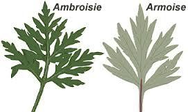 plantes,espèces invasives,réchauffement climatique,europe,allergie,santé