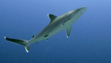 requin,mer,océan,poissons,environnement,changement climatique