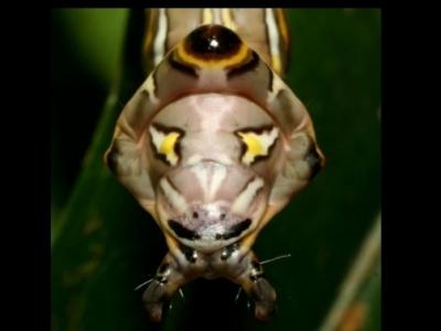insectes,chenille,oiseaux,darwin,sciences