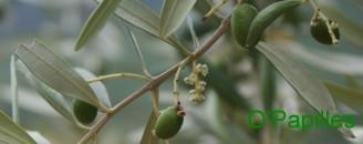 antipasti-olive.jpg