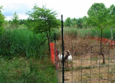biodiversité,chevre,pesticides,usa,écosystème,plantes invasives,plantes indigènes