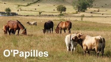 biodiversite-prairie.jpg