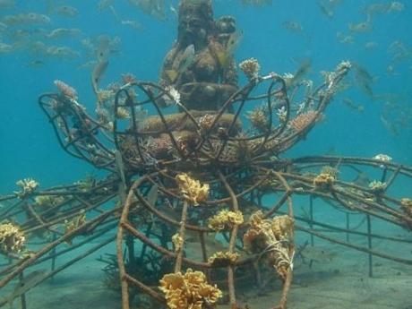 océanie,océans,coraux,environnement,écologie,réchauffement climatique,pêche
