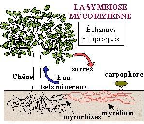 champignons,arbres,botanique,écologie,engrais,fongicide