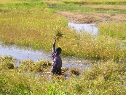 agroécologie,écologie,environnement,agriculture biologique,santé,alimentation,consommer autrement