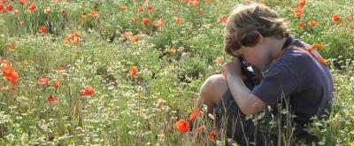 photographie,photos,sciences,insectes,abeilles,éducation,environnement