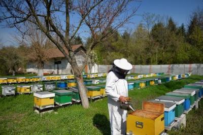 médecine,abeille,apiculture,roumanie,pollen,propolis