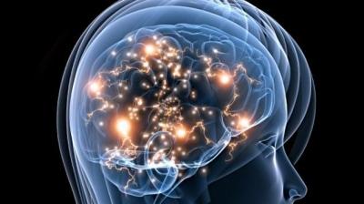 cerveau,santé,mémoire,sciences humaines,sciences sociales,éducation