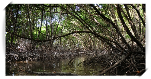 outremer_mangrove.jpg