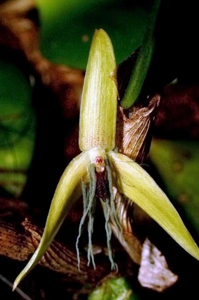 plantes,faune,orchidées,insectes,concours,biodiversité,écologie