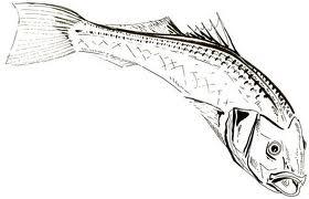 santé,pêche,poissons,pollution,mer,océans,alimentation