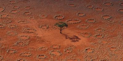 termites,afrique,écosystème,biologie,sciences