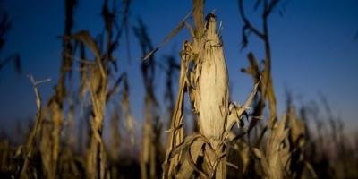 onu,alimentation,céréales,population,biocarburants,nourriture