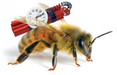 OGM,gironde,aquitaine,miel,apiculture,abeilles