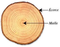 climat, changements climatiques, histoire, sciences,été,arbres, foret