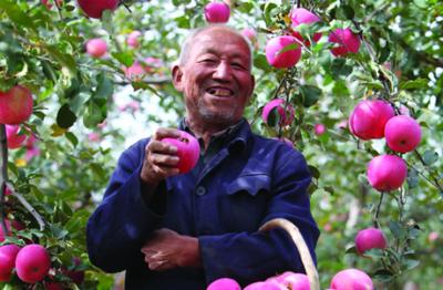 pesticides,santé,chine,pommes,pommier,environnement,pollution