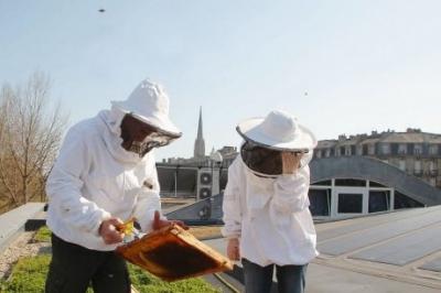 ruche,apiculture,abeilles,environnement,ville,bordeaux,aquitaine