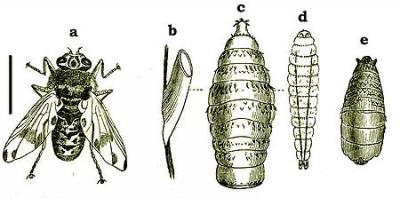 alimentation,écologie,élevage,protéines,population,chine