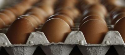oeufs,poulet,alimentation biologique,bio,consommation,consommer autrement,céréales,agronomie