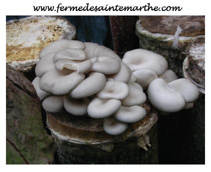 champignon,jardin,bois,automne,durable,semences,cuisine
