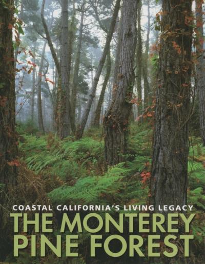 bois,foret,déforestation,espèces menacées,pin