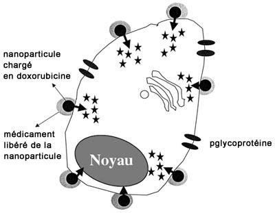 nanoparticules,nanotechnologie,sciences,santé,argent,expériences,pollution,environnement,energie