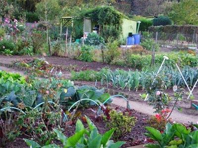pollution,légumes,potagers,écologie,santé