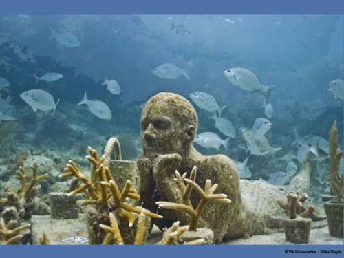 écologie,écosystème,mer,océan,caraibes,arts,coraux,tourisme