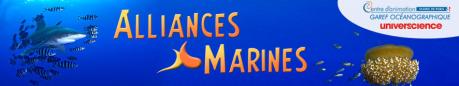 alliances-marines.png