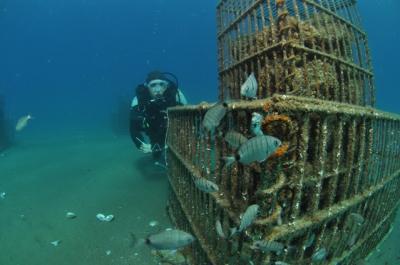 océans,mer,méditerranée,poissons,sciences,perpignan,écologie